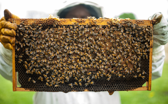 Understanding Why Honeybees Are So Important To Agriculture
